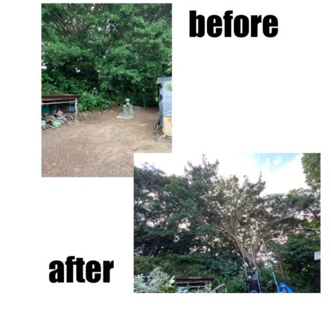 樹木の剪定、伐採